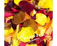 1Lb Freeze Dried Rose Petals Fall Mix