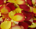 Yellow and Red Fresh Rose Petals Wedding 250