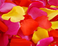 Yellow Red Hot Pink Fresh Rose Petals Wedding 2000