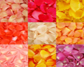 Assorted Colors Fresh Rose Petals for Wedding 4000