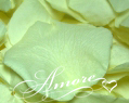 Light Green Pistachio Freeze Dried Rose Petals Wedding Large Case 64 cups